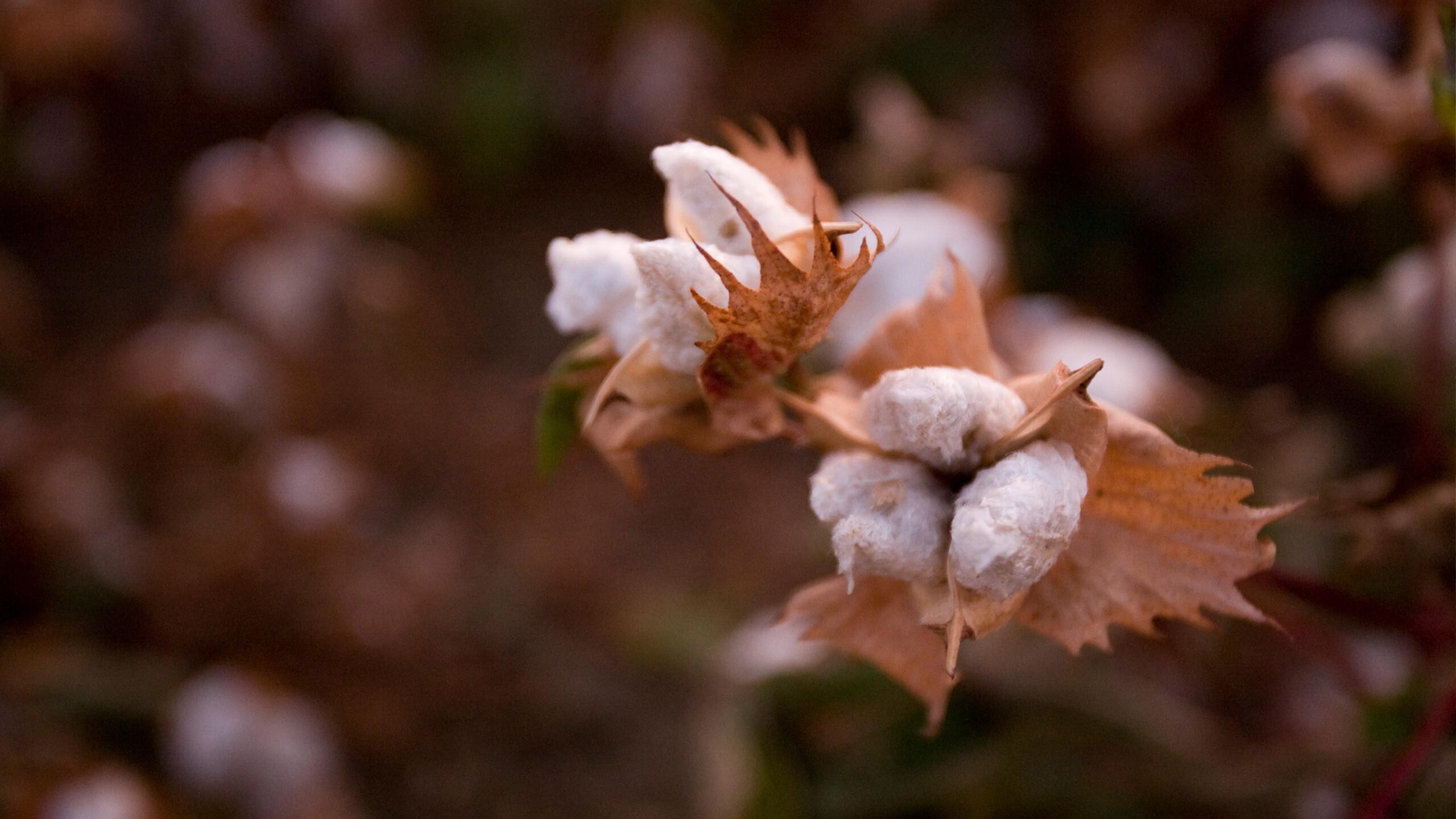 Organic Cotton Collection