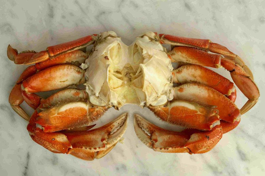 Dungeness Crab, Cleaned (1 crab)