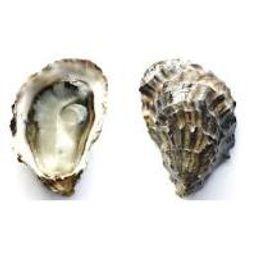 Grassy Bar Oysters