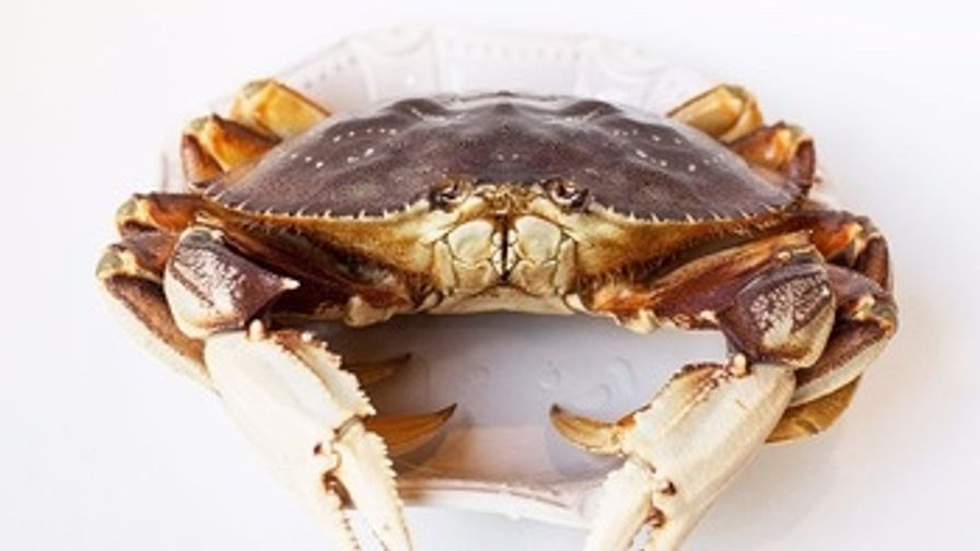 Live Dungeness Crab-Washington (1.5-2 lbs)
