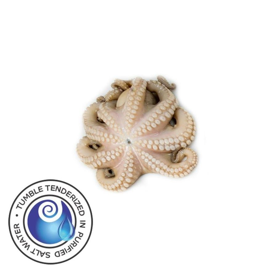 W2T Spanish Octopus (.5/.75lbs.)