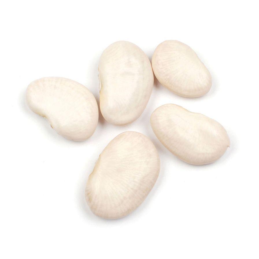 Giant Peruvian Lima Beans