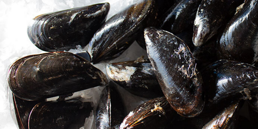 Local Tomales Bay Mussels