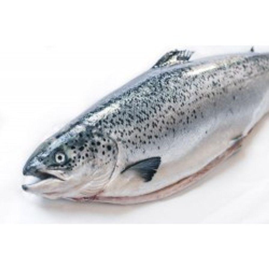 Salmon - Atlantic Canadian Whole Fresh (8-10 Lbs)