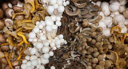 Fresh Mushroom, Care Package