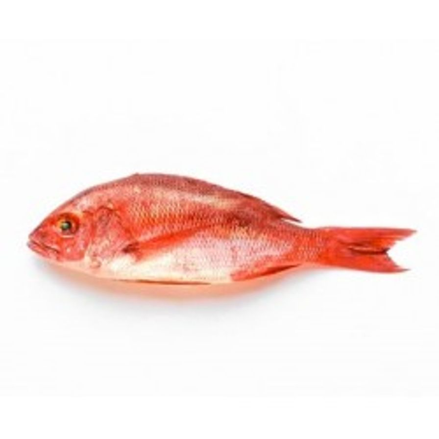 Snapper - Red Whole (1-2 lbs)