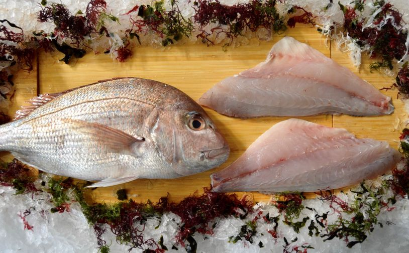 New Zealand Tai Snapper Fillet