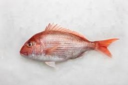 New Zealand Madai (Snapper)
