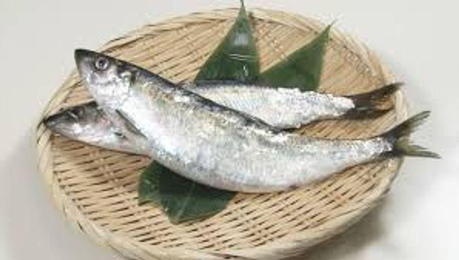 Nishin (Pacific Herring)