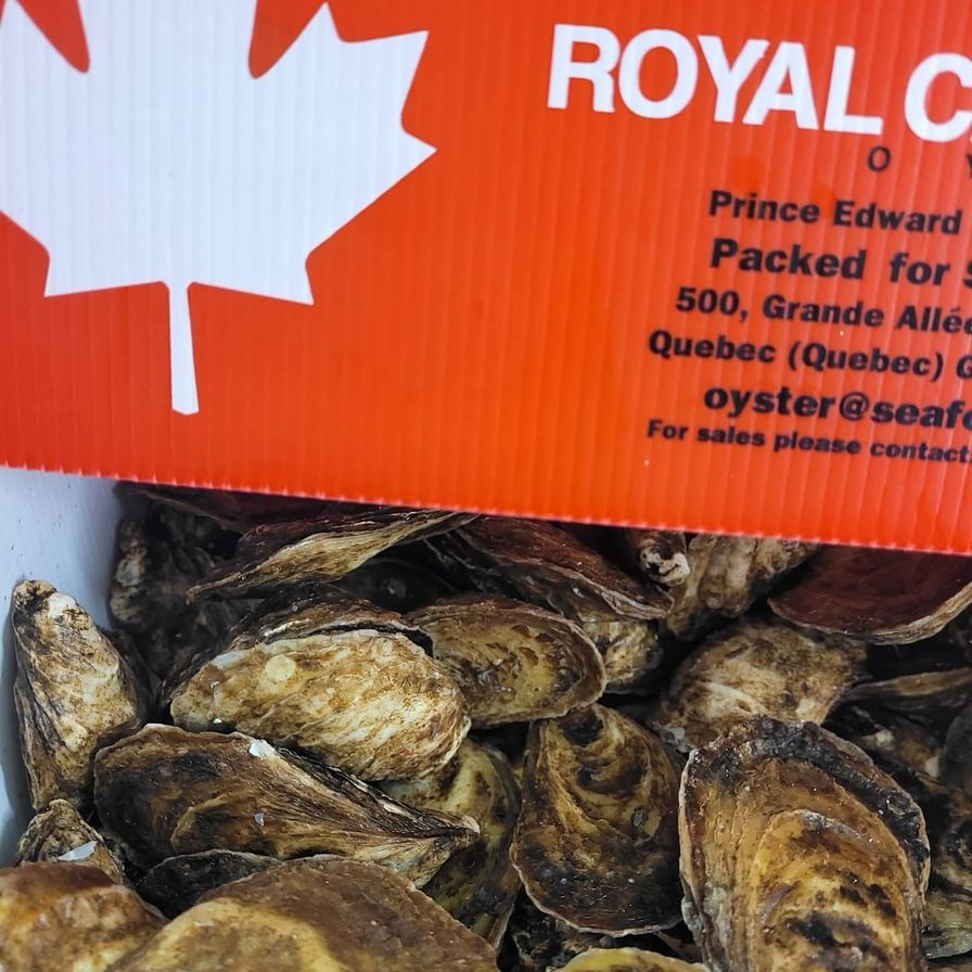 Fresh Live Oysters (by the case)