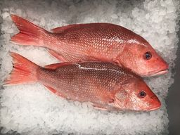 Whole (American or Northern) Red Snapper