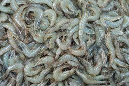 U10 Head-On White Gulf Shrimp (4lbs. case)