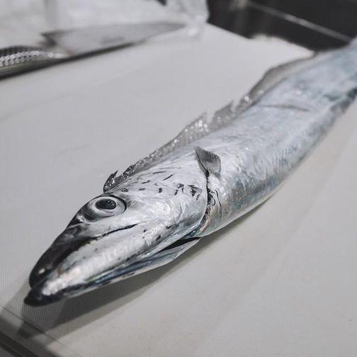 Tachiuo (Cutlassfish, Fresh)