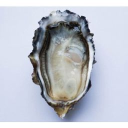 Oysters - B.C. Fanny Bay (6 Pcs)
