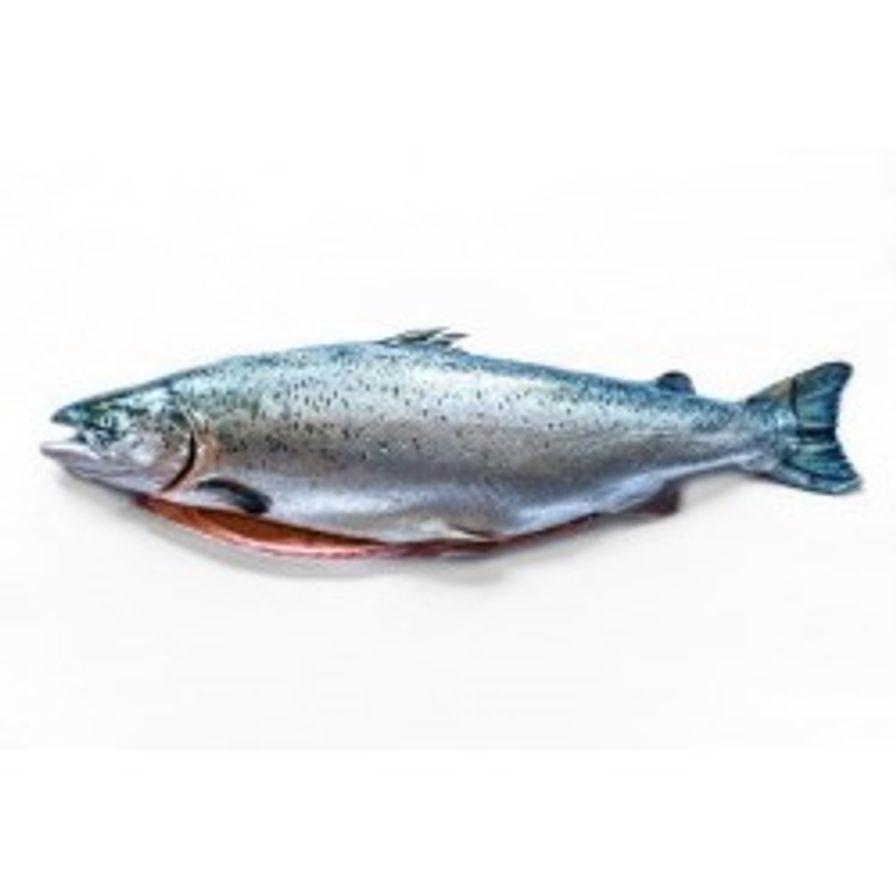 Salmon - Irish Organic Whole (12-14 lbs)