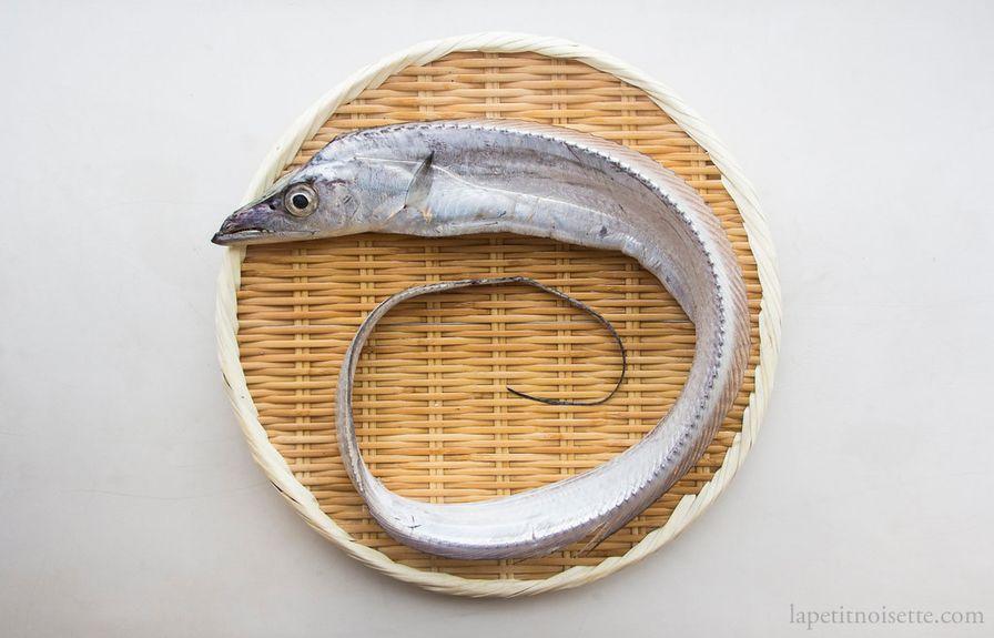 Tachiuo - Silver Beltfish