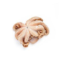 W2T Spanish Octopus (1-2lbs)