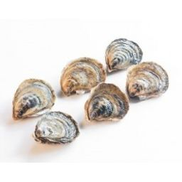 Oysters - Malpeque (6 pcs)