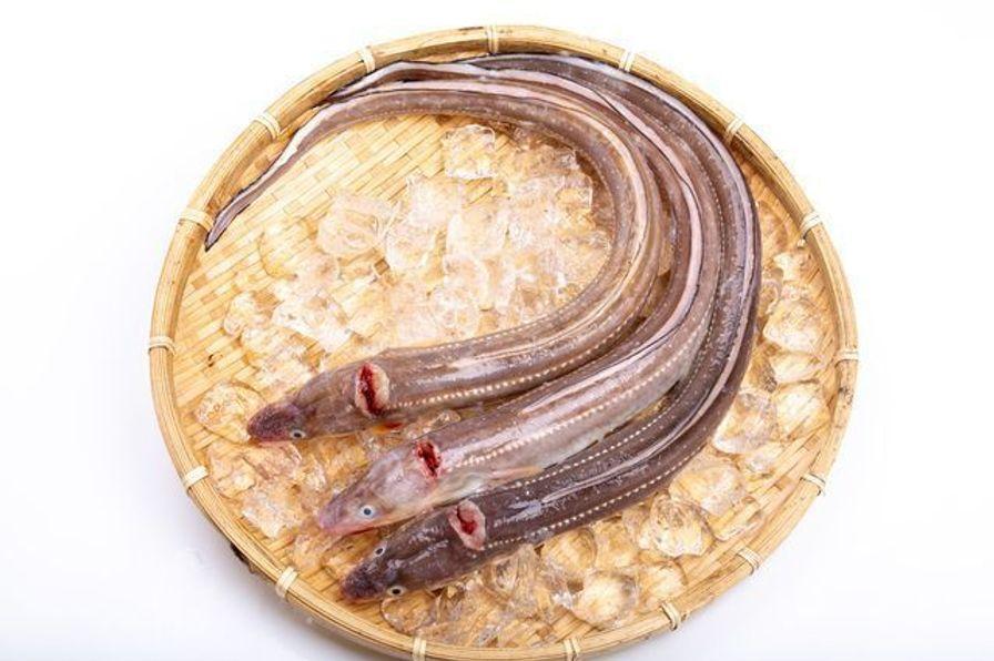Anago - Saltwater Eel