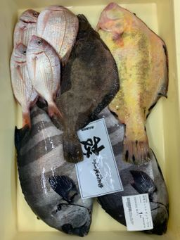 Omakase Toyosu Fish Box