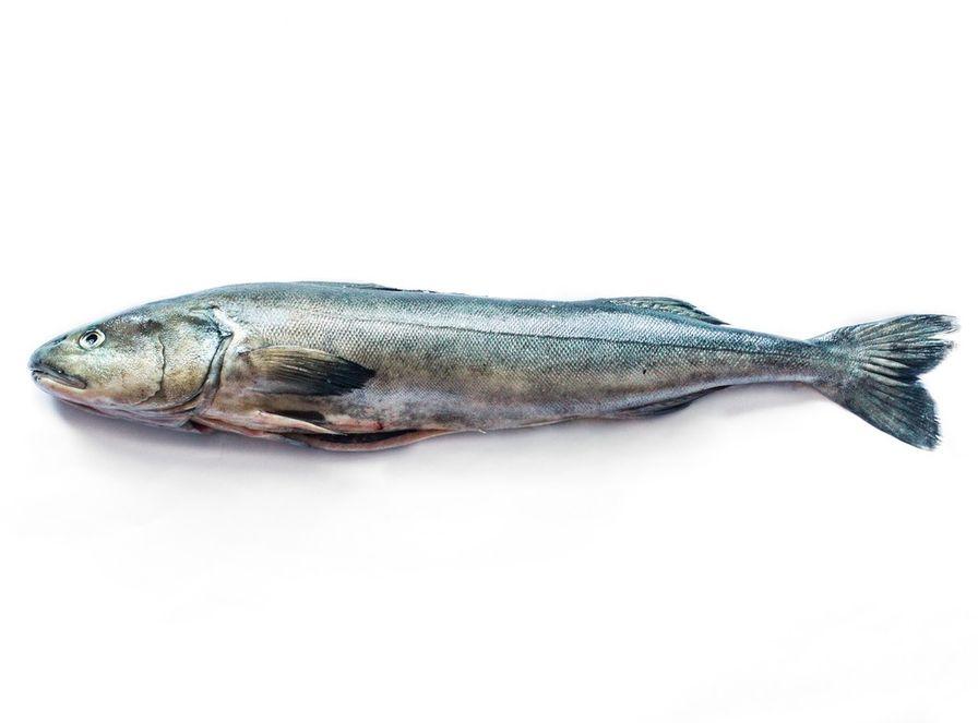 Cod - B.C. Black Cod Farm Fresh Whole Head On (4-6 lbs)