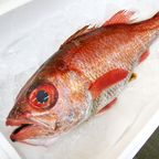 Nodoguro (Blackthroat Sea Perch, Fresh)