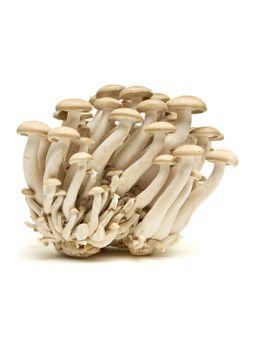 Fresh Brown Shimeji Mushroom
