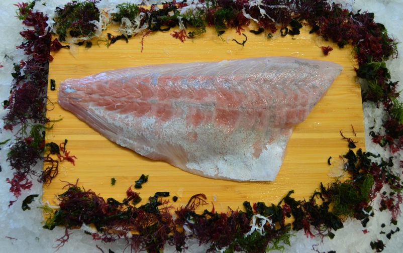 Japanese Kanpachi (Amberjack), Fillet