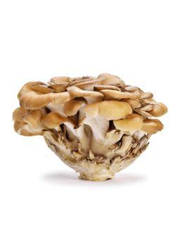 Fresh Maitake Mushroom