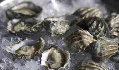Fresh Premium Oysters-Dozen