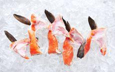 Fresh Salmon Collars