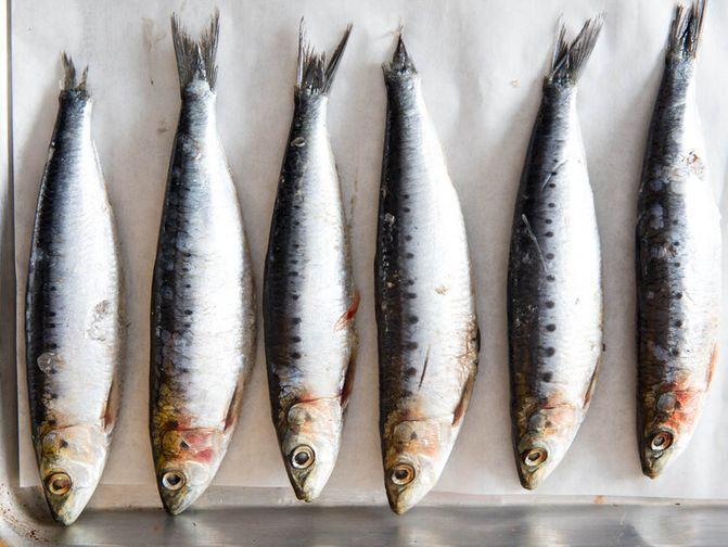 Fresh Wild Sardines