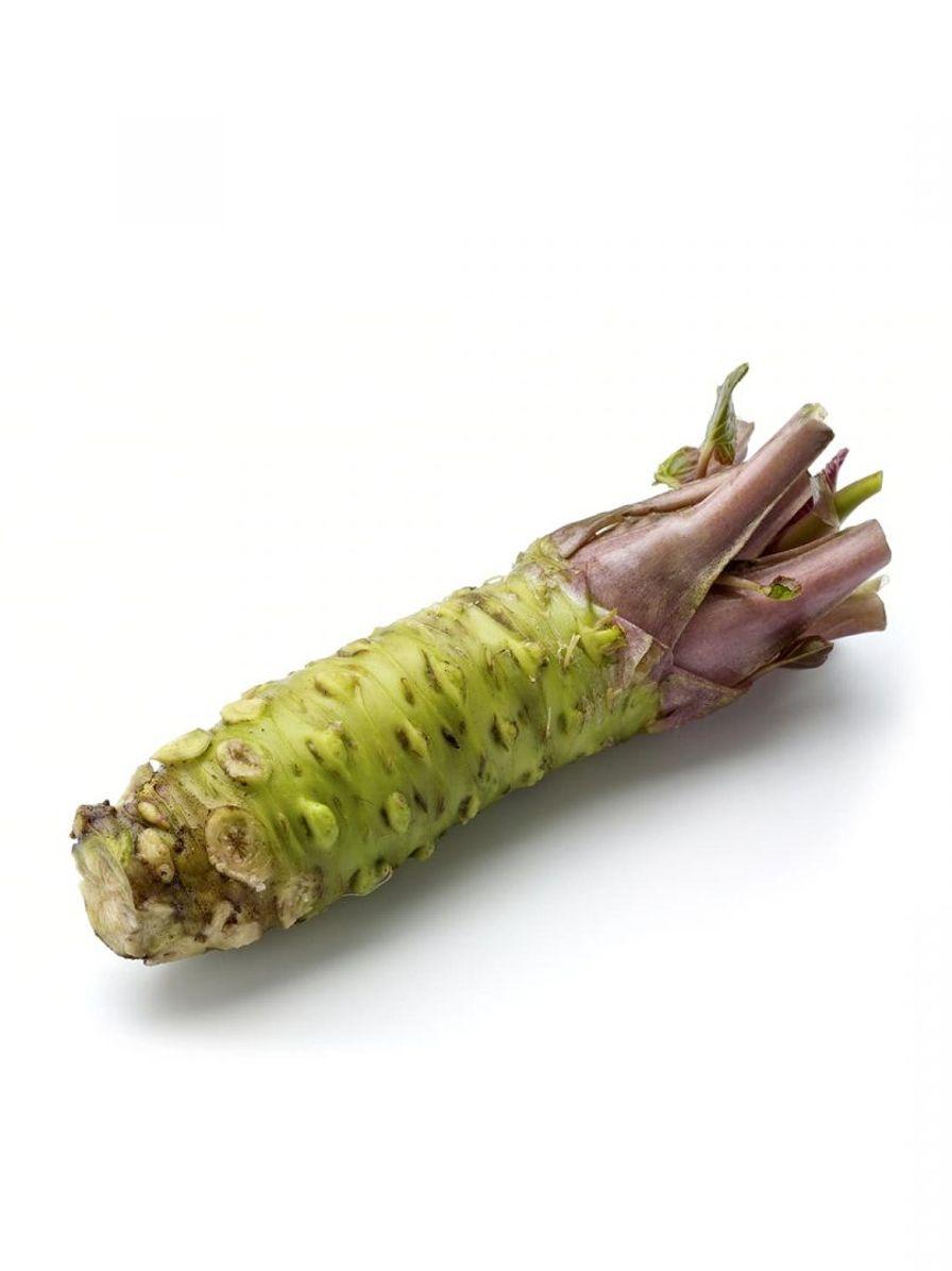 Fresh Wasabi Rhizome