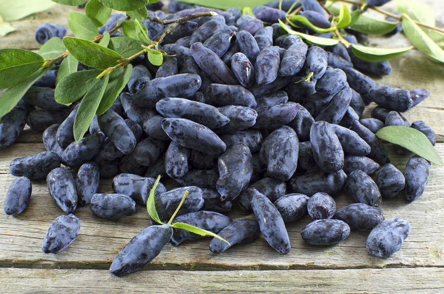 Frozen Haskap Berries