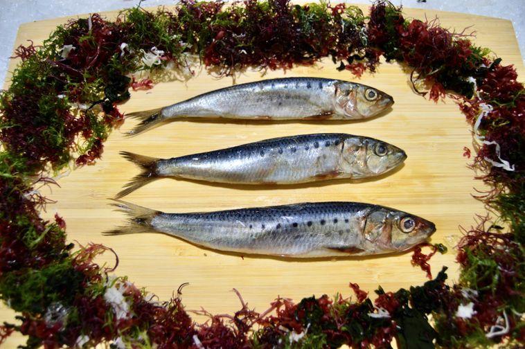 Japanese Iwashi/sardines