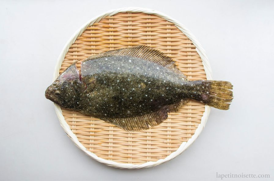 Hirame - Olive Flounder