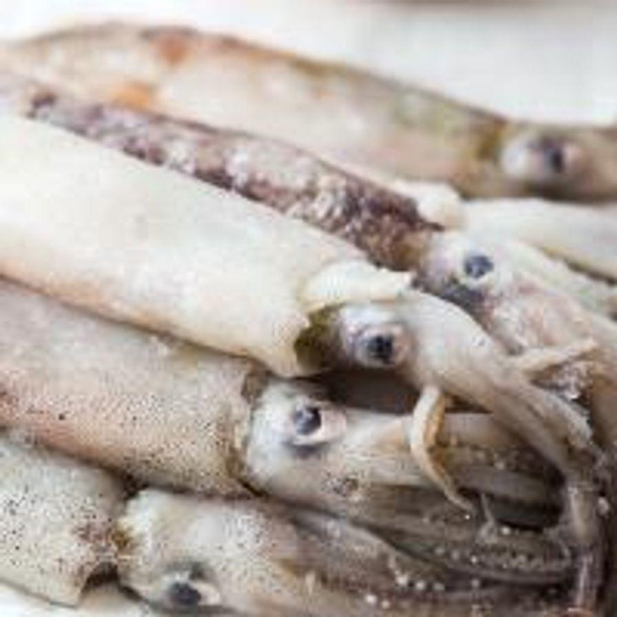 Monterey Squid (IQF)
