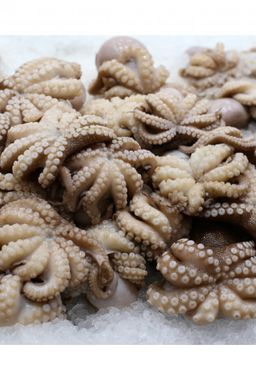 Whole cleaned baby octopus