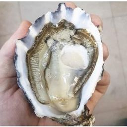 Oysters - B.C. Fanny Bay Large (6 Pcs)