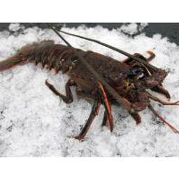 Live CA Spiny Lobster