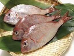 Kasugodai (Young Sea Bream)
