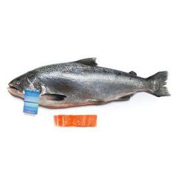 Salmon - NZ Premium ORA KING Whole (6-8lbs)
