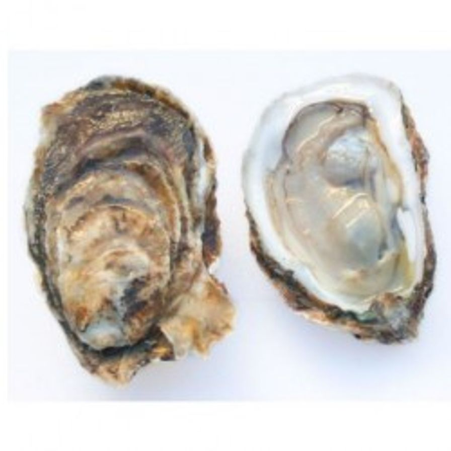 Oysters - East Coast Large (6 Pcs)
