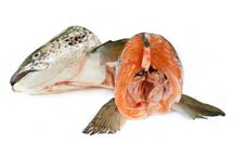 Fresh Salmon Heads