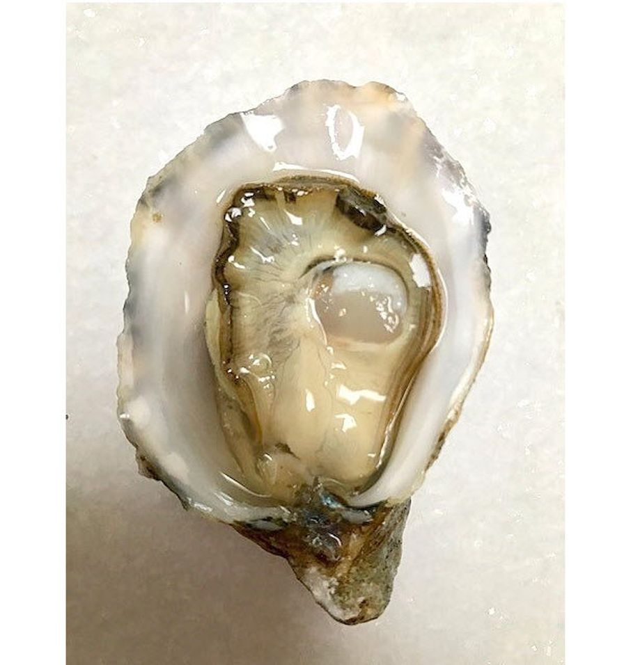 Cascadia Oysters