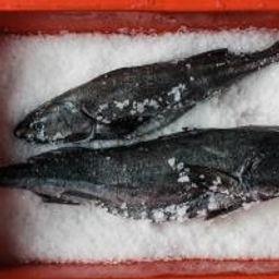 LARGE - SF Landed Black Cod (Whole, 4lbs.)