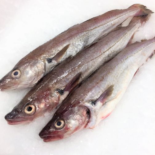 Wild Whole Whiting