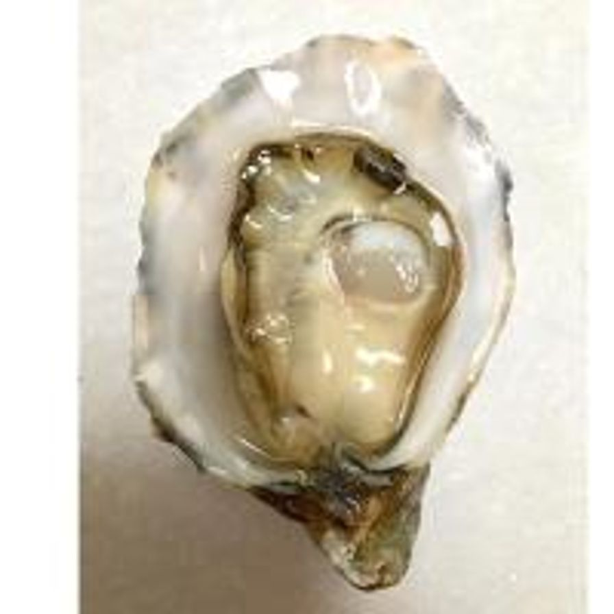 Willapa Soleil Oysters