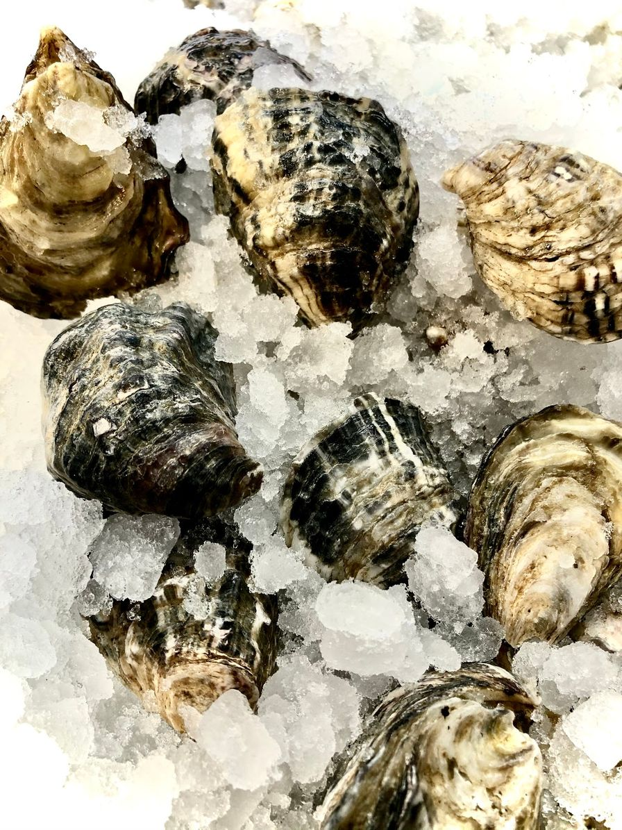Live Kusshi Oysters