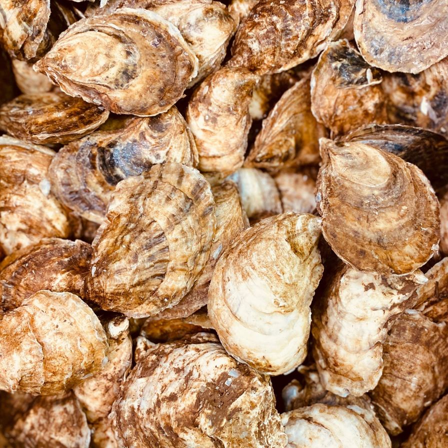 Fresh Live Oysters